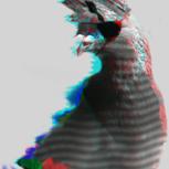 PigeonDamigion